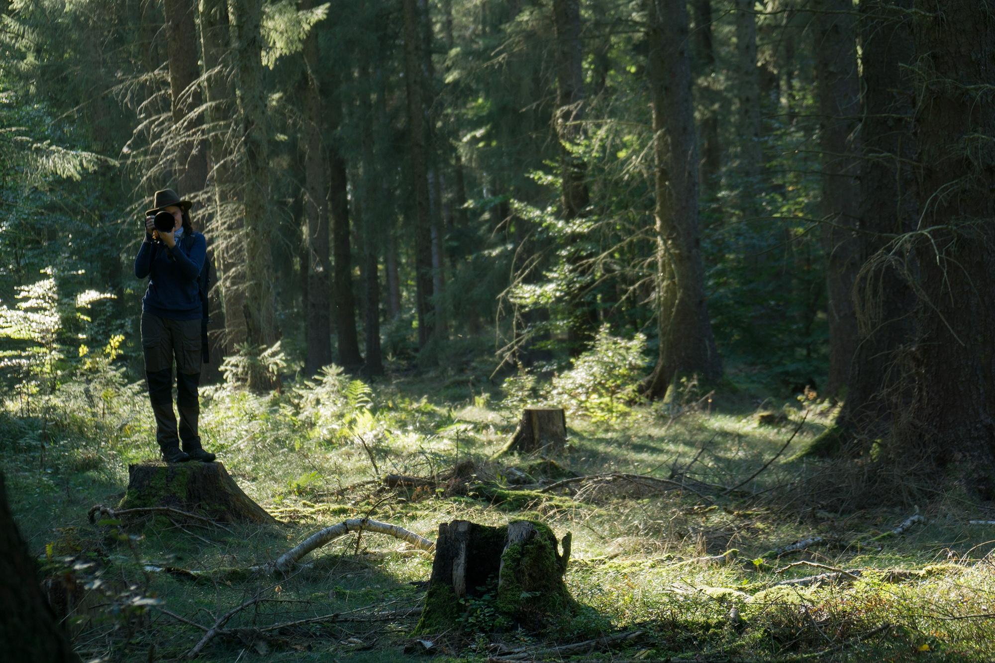 Ein Fotoguide zum Wald